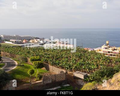 Park, Bananenplantage, Beherbergungsbetriebe in der Ortschaft Puerto de Santiago, Teneriffa Kanarische Inseln im - Stockfoto