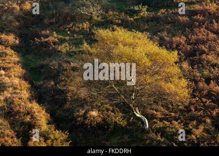 Herbstfärbung nr Stoke Pero, Exmoor National Park, Somerset, England, UK - Stockfoto