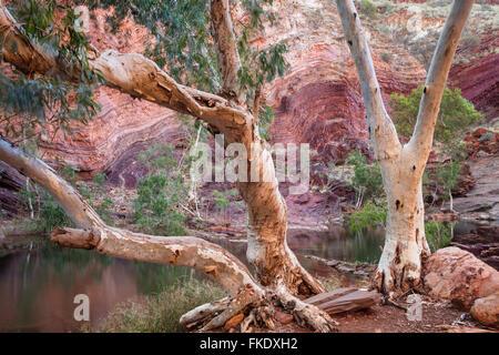 verdrehte alten Gesteinsschichten in Hamersley Gorge, Karijini-Nationalpark, Pilbara, Western Australia - Stockfoto
