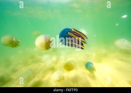 Schönen Blick aufs Meer Quallen im Meer von Thailand (Unterwasser-Blick) - Stockfoto