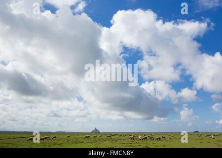 Frankreich, Manche, Mont Saint Michel Bay als Weltkulturerbe der UNESCO, Schafe in den salzigen Sümpfen und Mont - Stockfoto