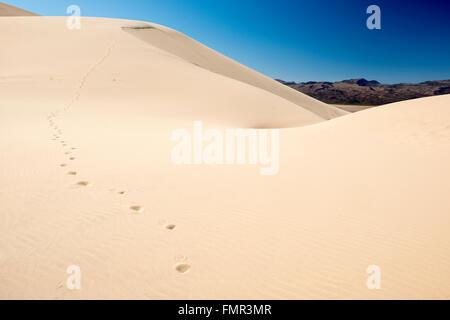 Eine Reihe von Fuß druckt Blei über Eureka Valley Sanddünen im Death Valley Nationalpark, Kalifornien - Stockfoto