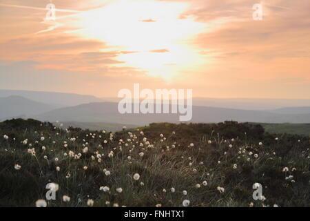 Die Sonne über den Hügeln in der Nationalpark Peak District, Derbyshire, Vergoldung Büschel von wilden Baumwolle - Stockfoto