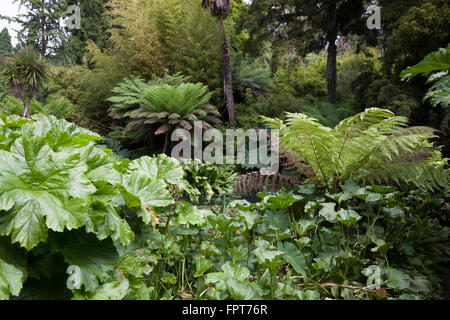 Dschungel in die Lost Gardens of Heligan in Cornwall - Stockfoto