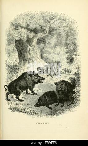Illustrierte Naturgeschichte des Tierreichs, wird eine systematische und populäre Beschreibung der Gewohnheiten, Struktur und Klassifikation von Tieren aus den höchsten auf der niedrigsten Formen mit ihren (pl. 16)