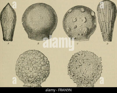 Allgemeine Physiologie; einen Überblick über die Wissenschaft des Lebens (1899) - Stockfoto