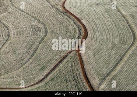 Luftaufnahme der Feldweg durch die Pflanzung von Getreide auf dem Lande - Stockfoto