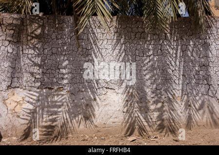 Mittag Schatten der Dattelpalme Äste auf den weißen Putz der Wand Lehmziegeln in einem Dorf in der Nähe von Medinet - Stockfoto