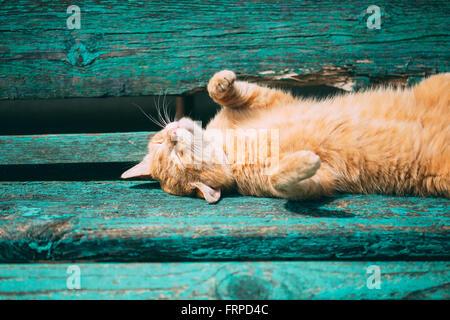 Lustige rote Kitten Katze schläft auf einer Bank im Park am heißen Sommertag - Stockfoto