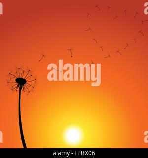 Löwenzahn Sonnenuntergang Illustration - Stockfoto