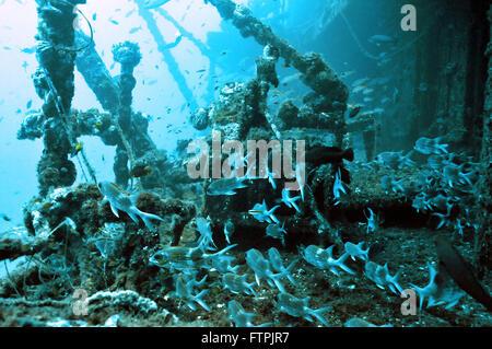 Unterwasser-Bilder an der brasilianischen Küste - Fernando De Noronha - Stockfoto
