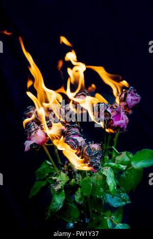 Es ist vorbei!  Strauß rosa Rosen in Vase Feuer und Flamme für Konzept der Beendigung einer Beziehung Stockfoto
