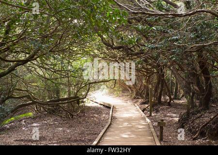 Wanderweg in einem Lorbeerwald, Cruz del Carmen, Macizo de Anaga, Teneriffa, Kanarische Inseln, Spanien - Stockfoto