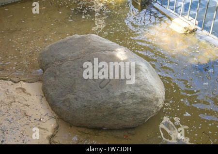 Plymouth Rock - Stockfoto