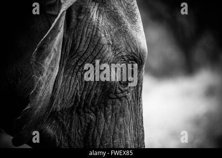 Elefanten gefangen während der Safari im Tarangire, Tansania - Stockfoto