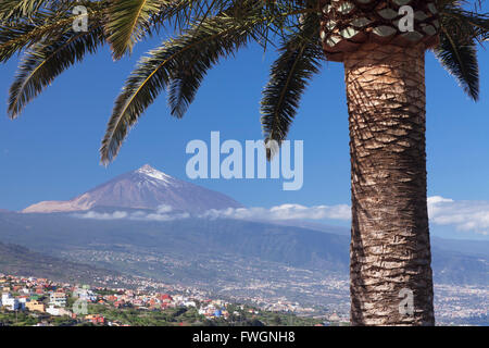 Blick über Orotava-Tal zum Pico del Teide, Teneriffa, Kanarische Inseln, Spanien, Europa - Stockfoto