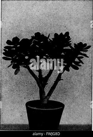 Arthur und Fritz Kahn Sammlung 1889-1932