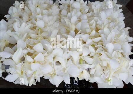 Duftende weiße Tahitis Blume Lei Halsketten warten auf Besucher auf ...