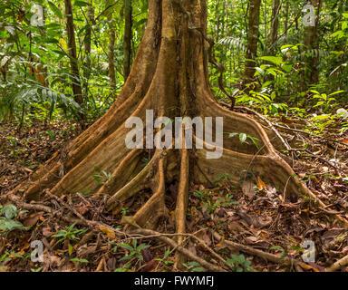 stockwerkbau regenwald temperatur