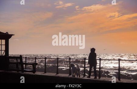 Sidmouth, Devon, 10. April 2016. UK-Wetter: Eine Dame geht einen Pudel am Sonntagmorgen turbulenten Meeren entlang der Strandpromenade Esplanade in Sidmouth, Devon.  Bildnachweis: Süd-West Fotos/Alamy Live-Nachrichten Stockfoto