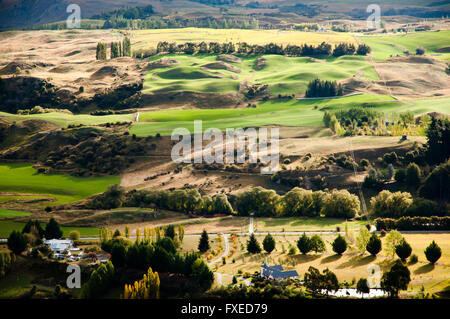Schafweiden - Neuseeland - Stockfoto