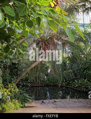 tropische Vegetation in Serres d ' Auteuil Paris - Stockfoto