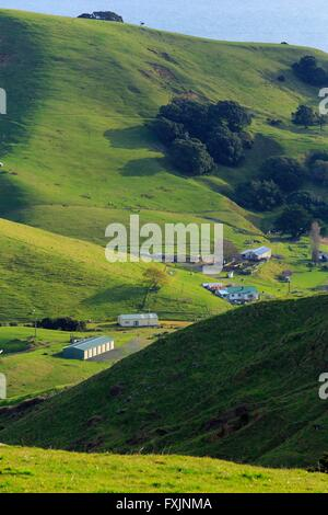 Coromandel Halbinsel, Nordinsel, Neuseeland - Stockfoto