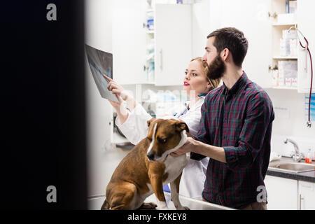 Tierarzt, Röntgen der Hund mit seinem Besitzer zu diskutieren - Stockfoto