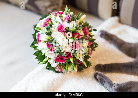 Katze und Brautstrauß - Stockfoto