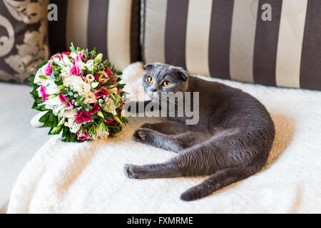 Scottish Fold Katze und Brautstrauß - Stockfoto
