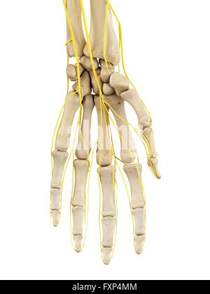Menschliche Hand Nerven, Computer Bild Stockfoto, Bild: 102519555 ...