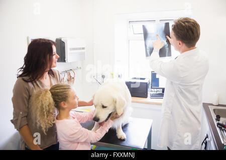 Tierarzt diskutieren Röntgen des Hundes - Stockfoto