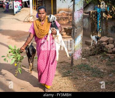 Inderin mit einem Zweig in den Mund zu Fuß entlang der Straße von Kuilapalayam, Durchführung einer Ziege und Zweige - Stockfoto