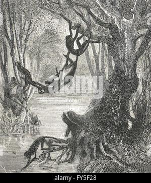 Affen bilden eine Brücke über einen Fluss - Stockfoto