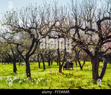 Britzer Garten, Neukölln, Berlin, Deutschland. 21. April 2016. Berliner, von schönem Wetter im freien gezogen besucht - Stockfoto