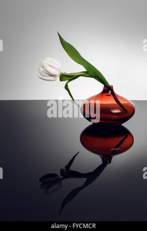 Weiße Tulpe in orange Glasvase mit Reflexion - Stockfoto