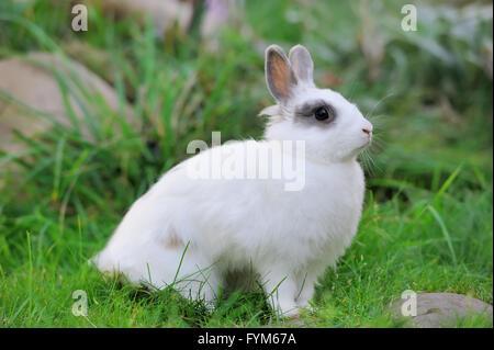 Baby Kaninchen Gras. Sommertag - Stockfoto
