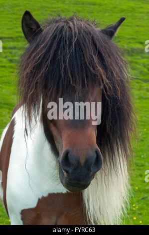 Horse Island - Stockfoto