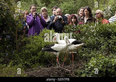 Storch mit einigen Menschen, Zoo Duisburg, Deutschland. - Stockfoto