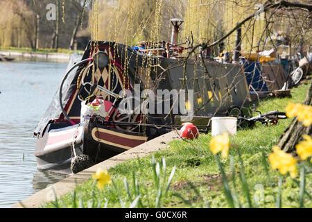 Narrowboat auf dem Fluss Cam unter einer Weide - Stockfoto