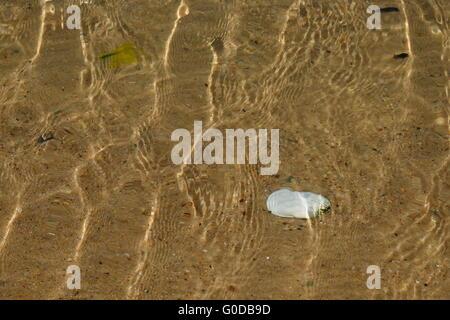 Weiße Muschel unter Wasser - Stockfoto