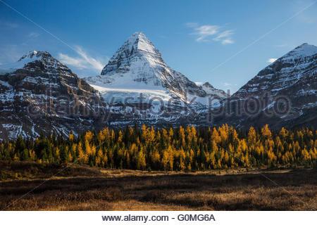 Herbstliche Bäume unter majestätischen schneebedeckten Berg - Stockfoto