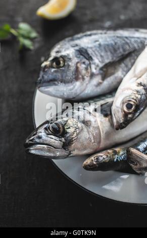 Nahaufnahme des rohen Goldbrasse, Seebarsch, Sardinen und Makrelen Fisch auf Teller - Stockfoto