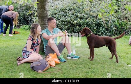 Brighton UK 7. Mai 2016 - ein paar genießen das warme Wetter mit ihrem Hund in Brighton Pavilion Gardens heute Nachmittag - Stockfoto