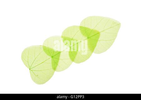 Gruppe von vier grüne herzförmige getrocknet Skeleton-Blätter Dekoration in einer Linie mit Überlappung isoliert - Stockfoto