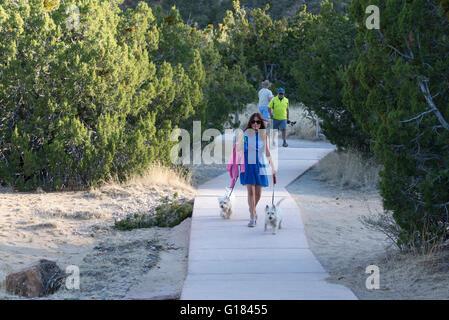 Frau, die Hunde auf einem asphaltierten Weg in El Malpais National Monument, New Mexico. - Stockfoto