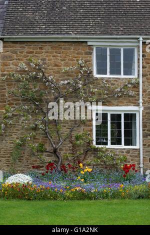 Frühling Blumen vor einer Hütte in Adderbury, Oxfordshire, England