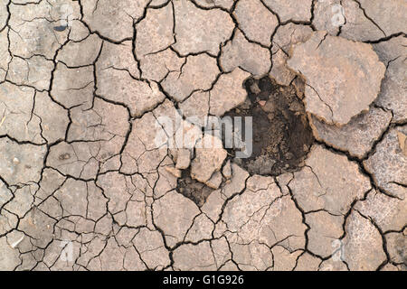 Cracekd Land in Dürre Saison, Hintergrundmuster, Katastrophe. - Stockfoto