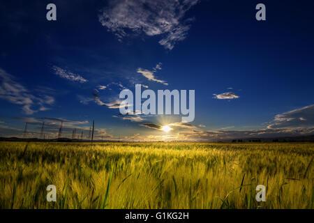 Sonnenuntergang über einem Weizenfeld im Sommer - Stockfoto