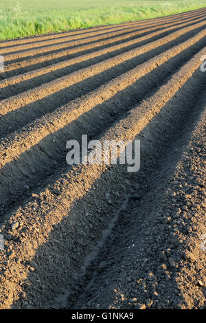 tiefe Furchen in bebaute Ackerfläche im Frühjahr - Stockfoto